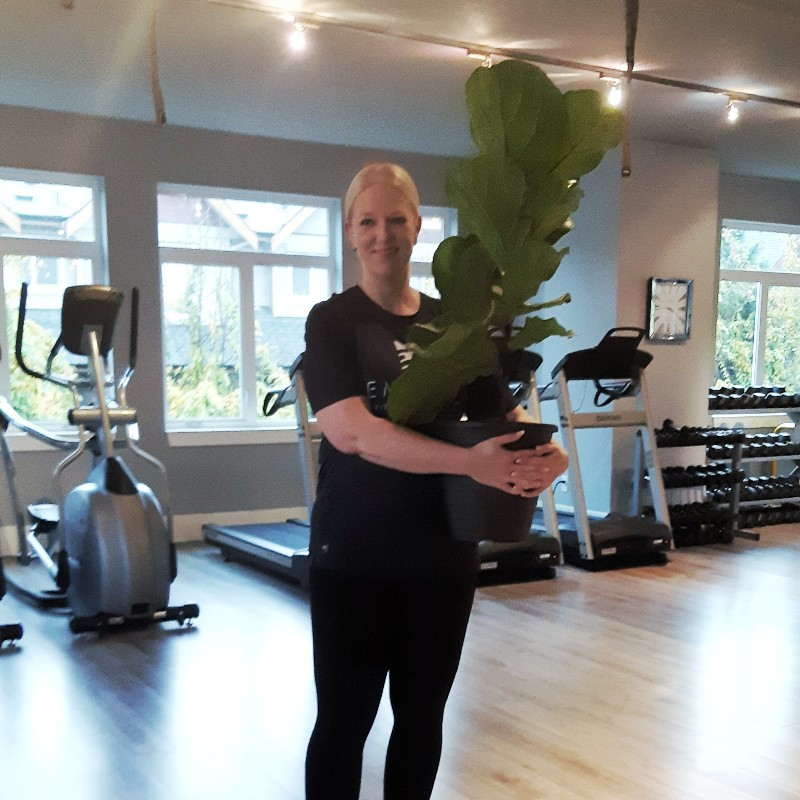 own a fitness studio